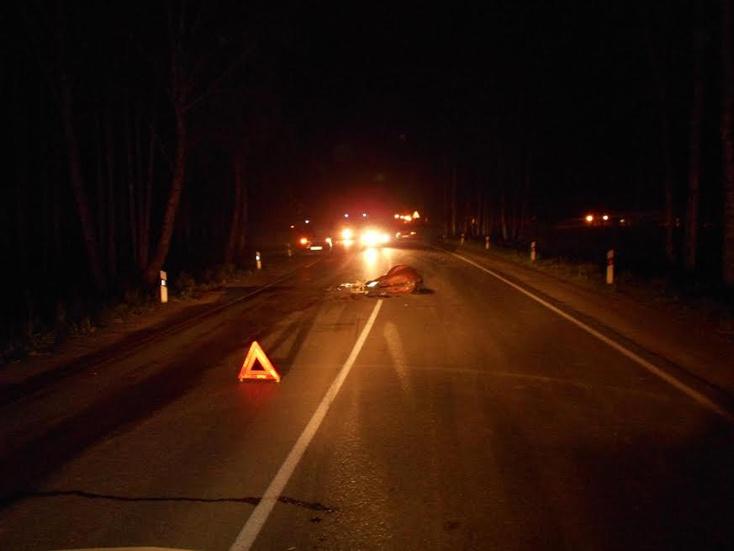 ВТюмени шофёр на«Daewoo Nexia» сбил лошадь