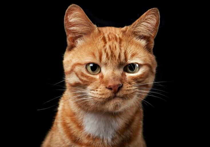 Рыжий кот youtube