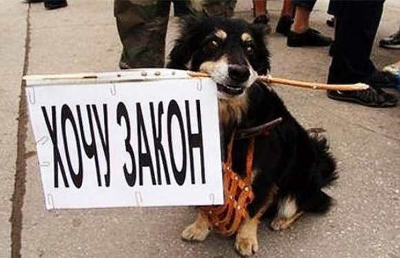 Мурманчане выйдут на митинг в защиту животных