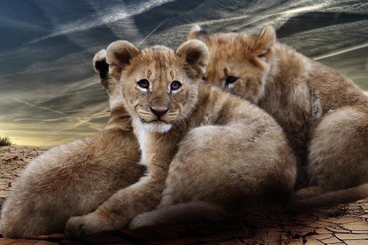 Москвичам разрешат содержать дома диких животных