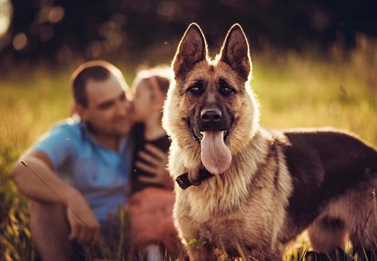 Сердца собак и их владельцев бьются в унисон, - ученые