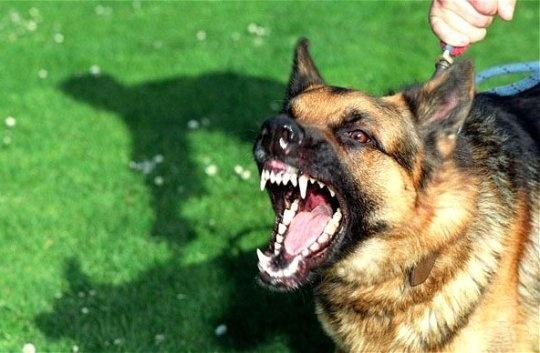 Лишиться свободы может тоболяк, натравивший собаку наполицейского