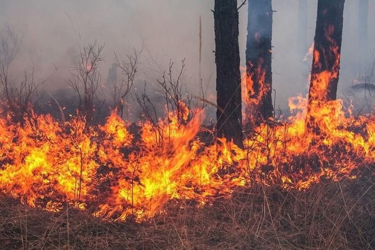 Якушев запретил жителям 22 районов Тюменской области ходить влес