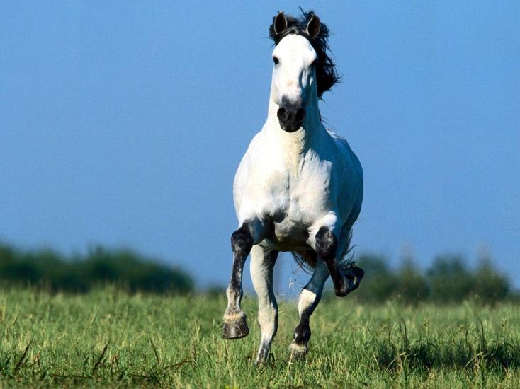 Британская журналистка приостановила коня наскаку ипродолжила эфир