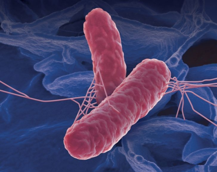 Information about salmonella including outbreaks symptoms and diagnosis
