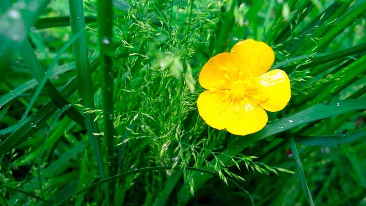 цветы трава бесплатно