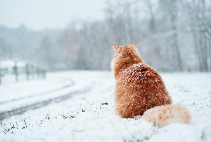 Напруду Лесном вТюмени впервый раз состоится День снега