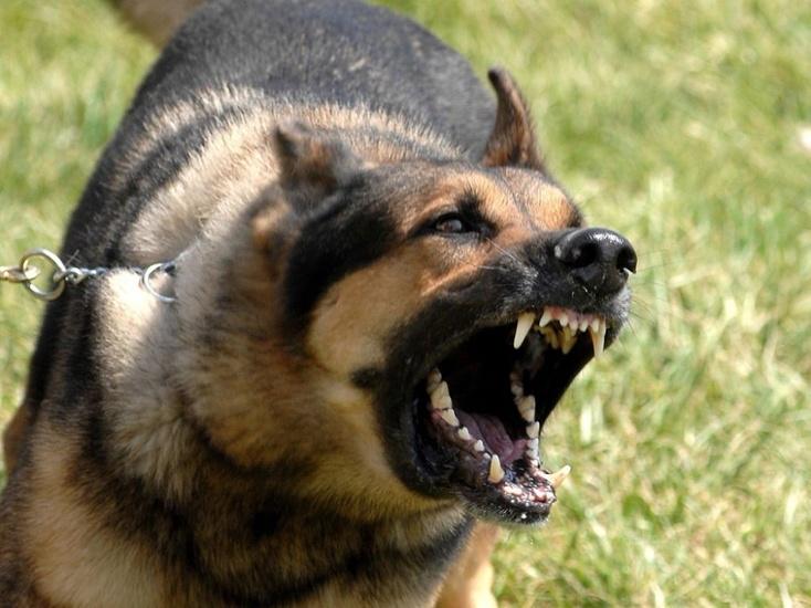 Хуже собак: ссора собаководов завершилась поножовщиной вКремле