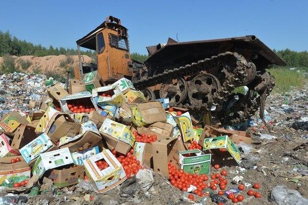 ВТюменской области уничтожили 11 тонн санкционных помидоров